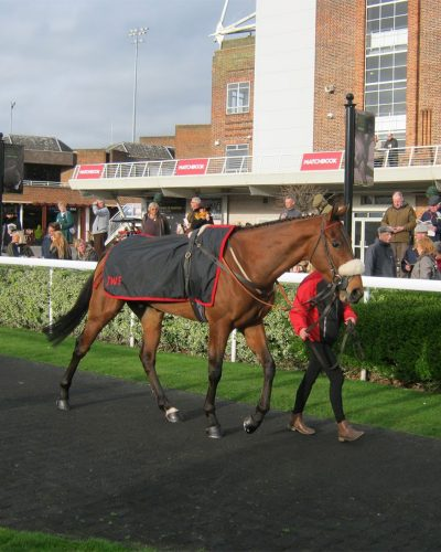 Justice Super in the paddock at Kempton